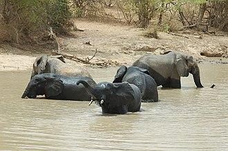 W National Park - Image: Elephants bath park w Niger 2006