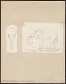 Elephas africanus - 1700-1880 - Print - Iconographia Zoologica - Special Collections University of Amsterdam - UBA01 IZ22000111.tif