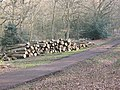 Epping Forest, new log pile - geograph.org.uk - 1214527.jpg