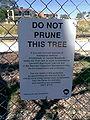 Eucalyptus todtiana - sign.jpg