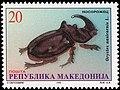 European Rhinoceros Beetle (Oryctes nasicornis).jpg