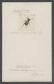 Eurysternus - Print - Iconographia Zoologica - Special Collections University of Amsterdam - UBAINV0274 019 09 0002.tif