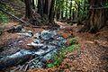 Ewoldsen Trail, Big Sur, California - panoramio (1).jpg