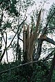 FEMA - 5122 - Photograph by Jocelyn Augustino taken on 09-25-2001 in Maryland.jpg