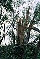 FEMA - 5122 - Photograph by Jocelyn Augustino taken on 09-25-2001 in Maryland.jpg