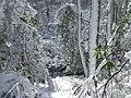 FL Swamp covered in Snow (5304122026).jpg