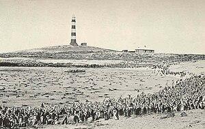Dassen Island - Image: FMIB 36499 Jackass Penguins on Dassen Island