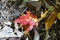 Fallen leaves @ Mount Royal @ Ville-Marie @ Montreal (30117736640).jpg
