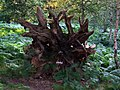 Fallen tree roots sculpture - geograph.org.uk - 909400.jpg