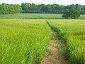Farmland, Basildon - geograph.org.uk - 814141.jpg