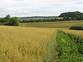 Farmland, East Garston - geograph.org.uk - 893025.jpg