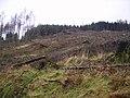 Felled Plantation - geograph.org.uk - 323419.jpg