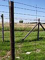Fenceposts with Barbed Wire - Majdanek Concentration Camp - Lublin - Poland - 02.jpg