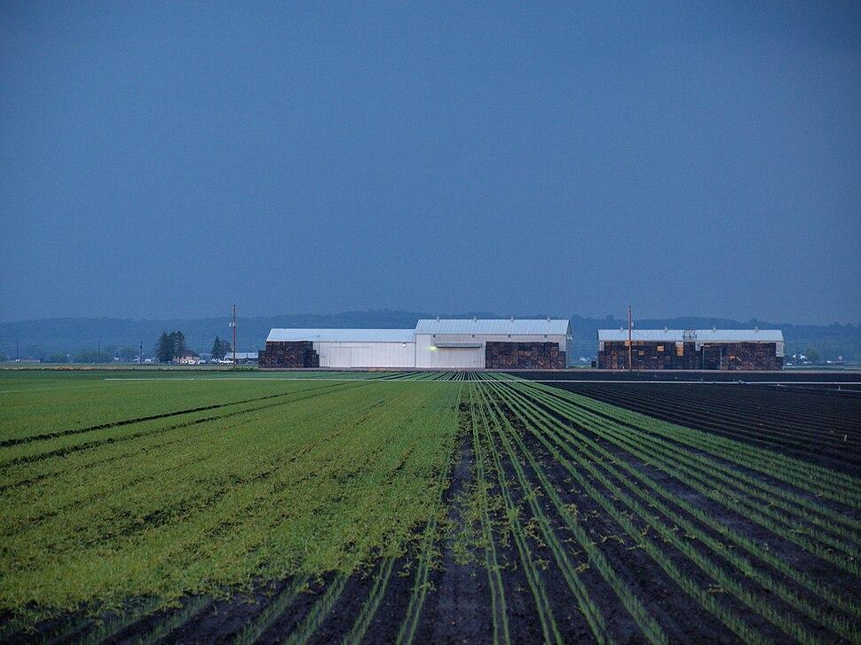 Fields of Rain