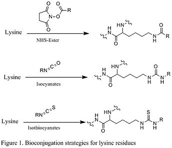 Figure 1. Bioconjugation strategies for lysine residues.jpg