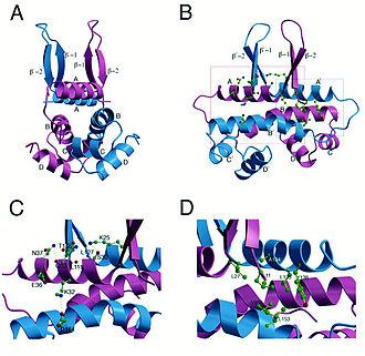 Fis - Fis K36E homodimer structure