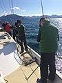 Fishing for halibut (27455530982).jpg