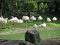 Flamingo pool (7856564358).jpg