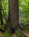 Flickr - Nicholas T - Hook Natural Area (11).jpg
