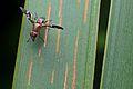 Flickr - ggallice - Fly.jpg