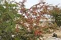 Flora della Sardegna 256 (02).jpg