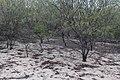 Flora do Parque Nacional Serra da Capivara (9907).jpg