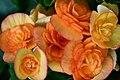 Flora of Thailand (6).jpg