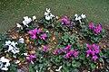 Flors al carrer de Loreto de Gandia.jpg