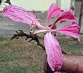Flower I IMG 2133.jpg