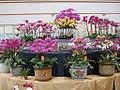Flowermarket8.jpg