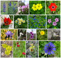 Flowers-of-Israel-ver001.png