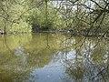Folly Pond - geograph.org.uk - 406210.jpg