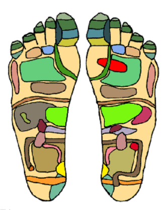 """Reflexology - An example of a reflexology chart, demonstrating the areas of the feet that practitioners believe correspond with organs in the """"zones"""" of the body."""