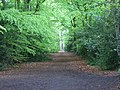 Footpath through beeches, Windlesham - geograph.org.uk - 166164.jpg