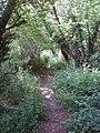 Footpath through belt of woodland, near Hyde Heath - geograph.org.uk - 193934.jpg