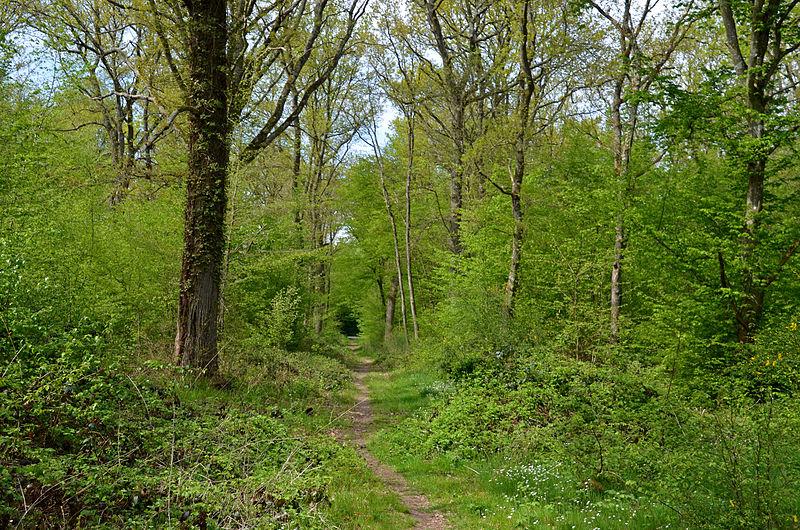 File:Forêt de Fontainebleau Printemps.jpg