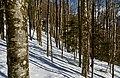 Forêt hivernale.jpg