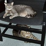 Force and Balthazar on the chair