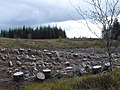 Forest Operations - geograph.org.uk - 547621.jpg