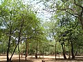 Forest at Kambalakonda in Visakhapatnam 02.JPG