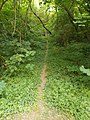 Forest path at the Holy Trinity Parish Church.jpg