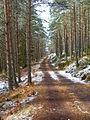 Forest road on Carn na Loinne - geograph.org.uk - 148947.jpg