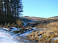 Forestry track leading to Drum Maen - geograph.org.uk - 1113842.jpg