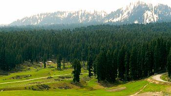 Forests of Doodhpathri,Jammu & Kashmir.jpg