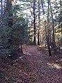 Frank Knight Forest.jpg