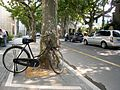 French Concession Area, Shanghai (2867688105).jpg
