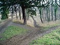 Fryston Wood - geograph.org.uk - 11133.jpg
