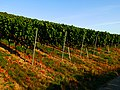 Full Of Grapes - panoramio.jpg