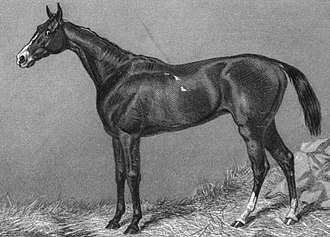 Gamos - Engraving of Gamos by Edward Hacker after Harry Hall, 1870.