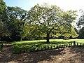 Garden, Bishops Hull house - geograph.org.uk - 998968.jpg